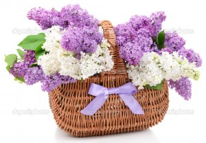 Beautiful lilac flowers in wicker basket isolated on white