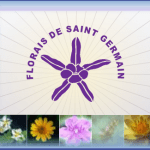 Students Formula - Saint Germain Flower Essence