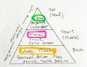 olfactory_pyramid