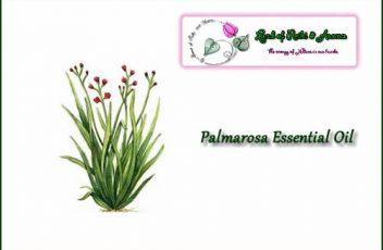 palmarosa_essential_oil