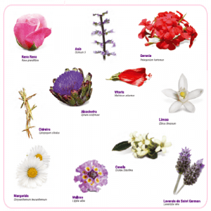 flower essences images