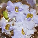 Grandiflora Flower Essence