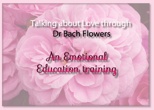 Talking love Dr Bach Flower remedies