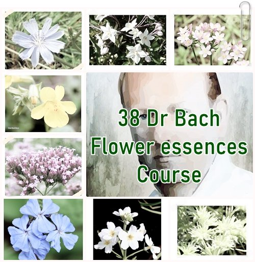 38-drbach-flower-essence-course